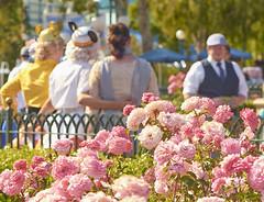 Dapperbounding in Spring (Natalie Bell) Tags: pink roses vintage starwars spring candid mickey ear bloom dca c3po dapper disneycaliforniaadventure earhat bb8 disneybound dapperday dapperbound