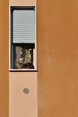 gatto sul davanzale. (LucaBertolotti) Tags: windows italy cats geometric window animals cat italia geometry minimal gatto crema animali