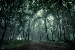 Dark Woods (ScottSimPhotography) Tags: uk trees mist green nature leaves misty fog forest dark landscape scotland woods track darkness natural britain sony foggy dramatic scottish eerie spooky lane ethereal ghostly dunnottar stonehaven gameofthrones visitscotland a6000