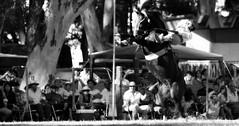 La alazana (Eduardo Amorim) Tags: horses horse southamerica argentina caballo cheval caballos appaloosa cavalos pferde herd cavalli cavallo cavalo gauchos pferd ayacucho chevaux gaucho cavall  amricadosul gacho amriquedusud provinciadebuenosaires  gachos  sudamrica suramrica amricadelsur sdamerika jineteada  tropillas buenosairesprovince americadelsud gineteada tropilhas tropilla americameridionale tropilha eduardoamorim