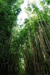 DSC00715_DxO_Grennderung (Jan Dunzweiler) Tags: hawaii jan maui bamboo hanahighway pipiwaitrail oheo bambus oheogulch bambooforest haleakalanationalpark hanahwy hwy360 bambuswald highway360 pipiwai haleakanationalpark dunzweiler haleakanp oheogulch oheo jandunzweiler