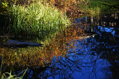Autumn Pond Reflection (pokoroto) Tags: autumn canada reflection calgary pond october alberta 10 2015     kannazuki   themonthwhentherearenogods 27
