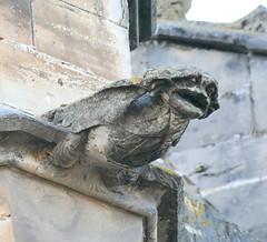 Gargoyles, Tortosa cathedral (Marlis1) Tags: spain cathedral gothic gargoyles gargouille tortosa gargolas marlis1 catalnya tortosacataluñaespaña panasonicfz1000 cathedraltortosa