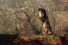 le tronc sculpt (bulbocode909) Tags: nature suisse hiver vert arbres valais fully troncs forts chtaigneraies