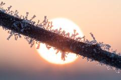 frozen branch (w-venne) Tags: ast frost kalt eis sonne sonnenaufgang raureif kristalle eiskristalle