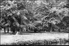 Van Gogh (Renevdb) Tags: park nature schilder painting paint painter van gogh schilderen