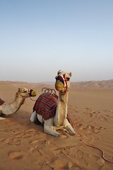 My ride (sonofwalrus) Tags: slr canon sand waves desert dunes uae camels  theemptyquarter eos7d