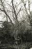 foto 43 (patrivivesm) Tags: blackandwhite bw plants naturaleza plant tree texture byn blancoynegro nature landscape arbol scary paisaje creepy splittone duotono tetrico tetric 365project proyecto365