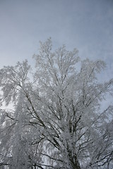 IMG_3022 (IdaAsplund) Tags: trees winter snow tree season vinter sn rstid