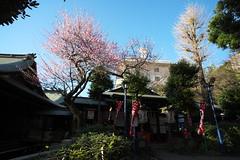 2016210 (Tokutomi Masaki) Tags: japan tokyo ueno walk     2016