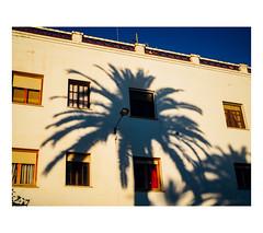 El que a buen rbol se arrima... (J. Garcia2011) Tags: street color sombra olympus rbol urbana urbano mundane banal 25mm vnz callejera comunidadvalenciana mundano