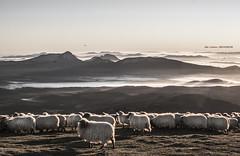 Amanecer en Gorbea (Jabi Artaraz) Tags: sunset sunrise amanecer zb gorbea ovejas rebaño ardiak euskoflickr jabiartaraz jartaraz