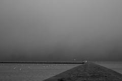 A man on edge (Lucky Poet) Tags: sea water monochrome scotland pier blackwhite edinburgh gloomy harbour forth 365 breakwater dreich granton
