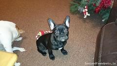 Wed, Feb 10th, 2016 Lost Female Dog - Turnpike Road, Ballymount Industrial Estate, Dublin (Lost and Found Pets Ireland) Tags: road dublin dog lost turnpike february 2016 lostdogturnpikeroaddublin