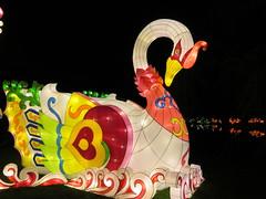 UK - London - Chiswick - Magical Lantern Festival - Swan (JulesFoto) Tags: uk england london swan chiswick chineselanterns chiswickpark chiswickhousegardens magicallanternfestival