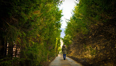 The Whisper of the Trees (the girl with the blue scarf) Tags: road trees green nature girl ahead forest lights peace path walk sunny beginning journey serenity february thegirlwiththebluescarf theaanca