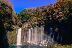 Shiraito Falls  () in Japan Shizuoka .  DSC_4476-11 (Ming - chun ( very busy )) Tags: travel tree river waterfall leaf maple rainbow nikon colorful 28mm   nikkor  shizuoka   d800  28mmf18        traveljapan          nikon28mmf18  nikon28mm18