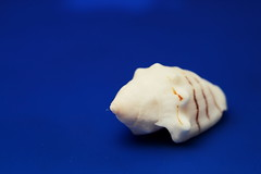 Conch Shell (Benny2006) Tags: ocean blue sea white color contrast shell