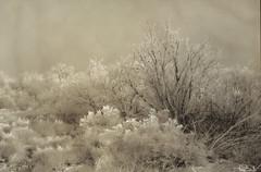 Fallon (Freezing Fog) No. 2 (sflewis) Tags: nevada lith fallon moerschse5 lodima moreschomega