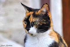 kedi (ismail kavakldan (instagram : smileykav)) Tags: animal cat nikon outdoor ngc kedi advanture hayvan