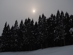 a bit cloudy (murozo) Tags: winter cloud sun snow ski tree japan cedar area akita yashima yurihonjo