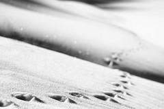 Tracks 1 (Zanna33) Tags: macro lago neve daniela ritratto appennino ghiaccio calamone ventasso