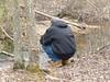 P1060809 (Mullica) Tags: park pine stream pinelands barrens parvin