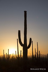 Saguaro (Rolandito.) Tags: park sunset arizona cactus usa monument silhouette national saguaro subset kaktus