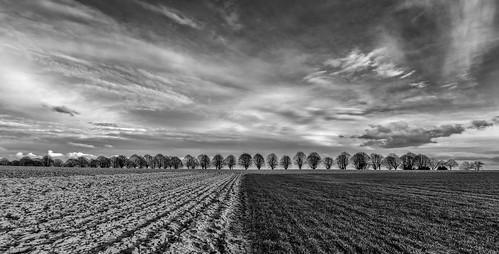Trees line