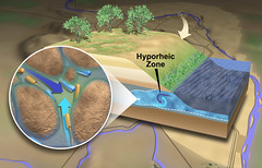 The Hyporheic Zone (Pacific Northwest National Laboratory - PNNL) Tags: river doe departmentofenergy pnnl pacificnorthwestnationallaboratory