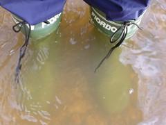 IMG_0056 (Belbo Bragamanga) Tags: rubberboots rainboots wellingtons wellies gumboots gummistiefel botasdegoma botasdelluvia botasdeagua katiuskas botas boots calzado footwear galoshes stivali gomma bottes caoutchouc