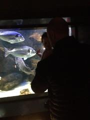 Fête de la gratuité à l'Aquarium Muséum à Liège !