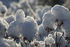 snowy closeup (jtunkelo) Tags: winter snow sunrise helsinki snowy lumi 2016