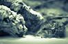 Rüsselspringer / Short-eared elephant shrew [explore Mar 13, 2016] (roland_lehnhardt) Tags: elephant animals munich münchen bavaria zoo tiere afrika tierpark mammalia shrew hellabrunn shorteared säugetiere ef85mm rüsselspringer macroscelides eos60d proboscideus