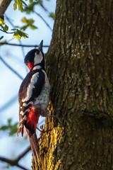 Spring in Rotterdam (Wessel...) Tags: netherlands canon spring rotterdam woodpecker nederland vogels lente specht kralingen kralingseplas