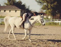 (suzcphotography) Tags: horse cute canon 50mm hug center pony jumper hunter equestrian equine bridgewater t3i