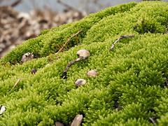 Mossland (jesse_the_ros) Tags: macro green nature animal forest photography moss spring sticks estate outdoor exploring seeds explore april amelisweerd rhijnauwen bunnik pmax
