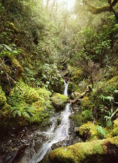 (felix.h) Tags: canoneos400d canon eos 400d eoskissdigitalx digitalrebelxti sigma1020mm sigma1020 wideangle arthurspass canterbury newzealand nature stream river creek green water summer wet landscape forest dreamlike