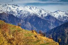 Sunny Spell (_Amritash_) Tags: travel winter india mountains landscape landscapes ropa himachal himalayas mountainscape snowcappedmountains colorsofindia himalayanvillage himalayanlandscape travelinindianhimalayas exploringinfinity lambhri