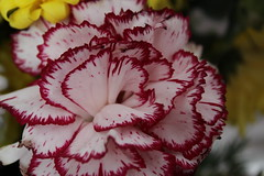 Petaloso (alice.vergottini) Tags: fiore petali