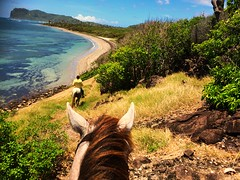 Vieux Fort (Lonfunguy) Tags: caribbean horseride vieuxfort saintlucia simplybeautiful betweentheears betweentheearsofahorse