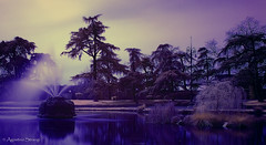 Spring is coming (Agostino Strangi) Tags: infrared r72 tamron2875mmf28