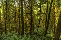 Ecola Forest (Cole Chase Photography) Tags: oregon canon moss rainforest pacificnorthwest ferns cannonbeach mossy ecolastatepark forestroad indianbeach eos5dmarkiii