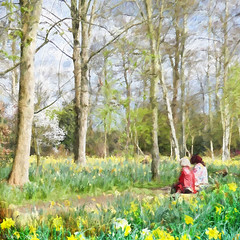 Poetic inspiration (Lemon~art) Tags: park flowers trees people inspiration texture nature smile relax happy spring sitting view blossom walk peaceful manipulation enjoy daffodil layers redcoat wordsworth ahostofgoldendaffodils topazfilters