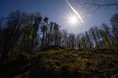 Frhlingserwachen (Manuel Eumann) Tags: nature landscape spring nikon natur sunny chemtrail landschaft sonne frhling flensburg kondensstreifen wideangel weitwinkel d610 1835mm manueleumann