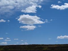 P6250046 (sylviagreve) Tags: sky bird dryfalls 2011 deeplake