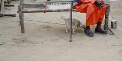 @ Agra, UP (Kals Pics) Tags: life travel people dog pet india man saint animal puppy bed culture agra walkingstick cot roi villagepeople cwc villagelife rurallife uttarpradesh relation ruralindia indianvillages incredibleindia foodcarrier ruralpeople rootsofindia kalspics nagladhimar culturalindia chennaiweelendclickers nagladevjit kachpura
