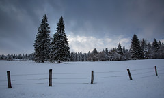 Winter Landscape (Philippe Saire    Photography) Tags: canon eos 5d mark iii ef 1740mm f4l usm nature paysage landscape doubs jura franchecomté hautdoubs france champs field meadow campagne prairie terre ground arbre tree sapin frozen gelé neige snow winter hiver froid cold ice glace wideangle sky nuages clouds rayon ray light lumiere photo photography fullframe ff pleinformat philippesaire ciel