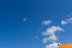 TH20150514A603395 (fotografie-heinrich) Tags: strand himmel mwe ostsee vogel zingst