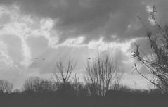 flying subjects (pumobelix) Tags: blackandwhite birds clouds plane landing foma caffenol fomapan fomacreative